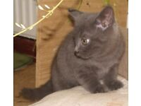 8 week old kittens, very playful, ready to go today.