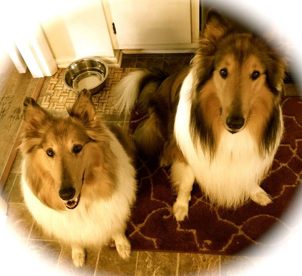 Two_Collies_Clocks_Collectibles