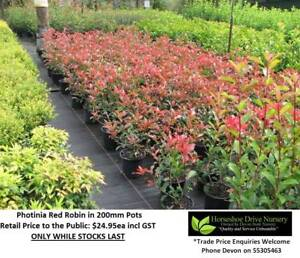 Need PRIVACY HEDGE or SCREEN?  We have the plants FOR YOU! Mudgeeraba Gold Coast South Preview