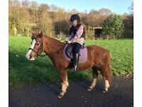 Bombproof child's Pony