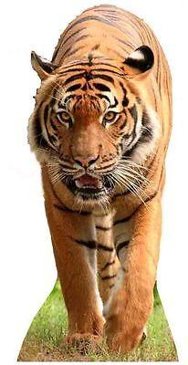 Jungle Themed Cutouts (TIGER - LIFESIZE CARDBOARD CUTOUT / STANDEE wild cat animal theme jungle)