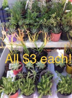 100's!! Plants & Succulents in pots. $3