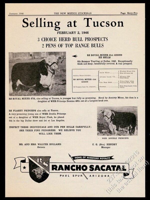 1946 Hereford cow bull sale 2 photo Rancho Sacatal Paul Spur Arizona print ad