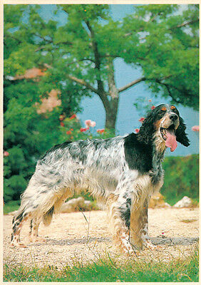 Carte postale chien chasse setter anglais englisher british setter