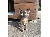Kittens **** S O L D****