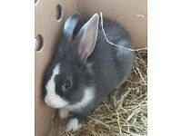 15 week old rabbit and hutch
