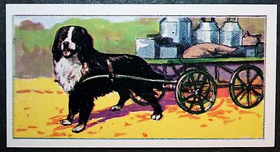 Bernese Mountain Dog & Transport Cart     Original Vintage  Coloured Card  # VGC