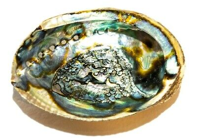 """3/"""" #7116 2 1//2/"""" 50 PCS NATURAL RED ABALONE SEA SHELL ONE SIDE POLISHED"""