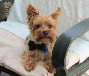 DOGGIE LOVE~SMALL DOG SITTING~MY HOME~CLOVERDALE SURREY