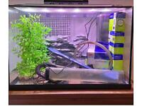 Fully Equiped Aquarium (fish tank with alots of accessories)