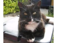 Missing Cat Ormeau/ Ballynafeigh, Belfast
