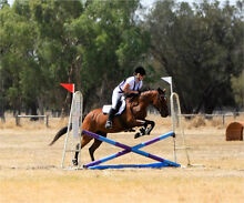 One of a kind Stock horse x Mare West Perth Perth City Preview
