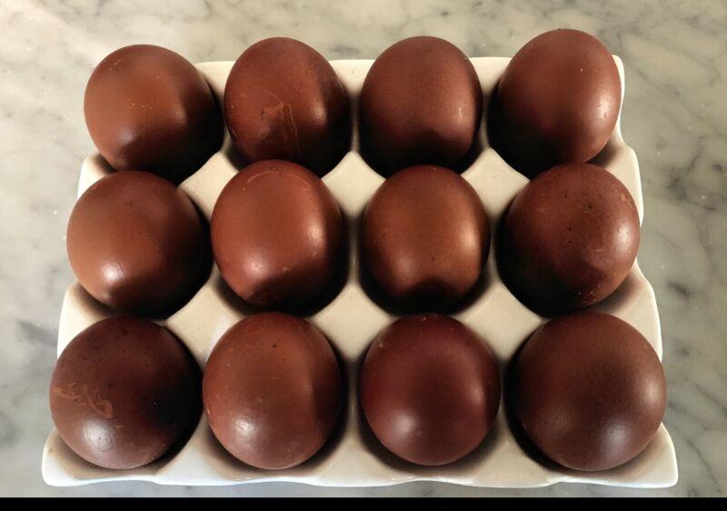 10 + Black Copper Marans Hatching Eggs ~ Bev Davis and Greenfire Bloodlines