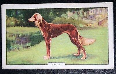 SALUKI      Superb Original 1930's Vintage Coloured Card ## VGC