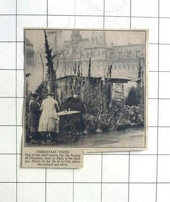 1937 Christmas Trees For Sale At The Quai Aux Fleurs In The Ile De La Cite ()
