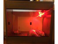 Vivarium - Two heat mats, UV light, food bowl, housing included