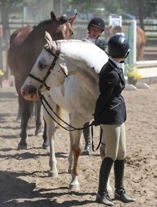 Perfect Fist Horse / Lesson Horse- Cute Appy