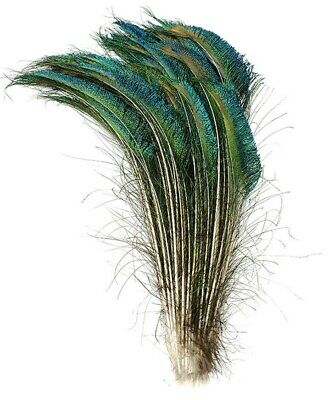 PEACOCK SWORDS Natural Feathers 10-35
