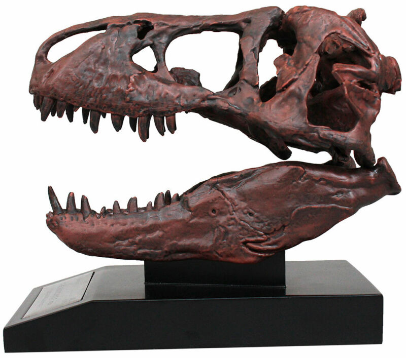 Tyrannosaurus Skull 1/10th Scale Smithsonian Licensed - The Nation