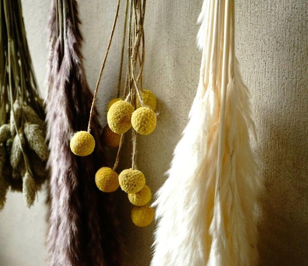 Trockenblumen Pampasgras Trommelstöckchen Eukalyptus DIY getrocknet Natur Strauß