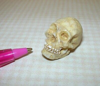 Miniature Resin Skull w/Teeth for Halloween: DOLLHOUSE Miniatures 1/12 Scale