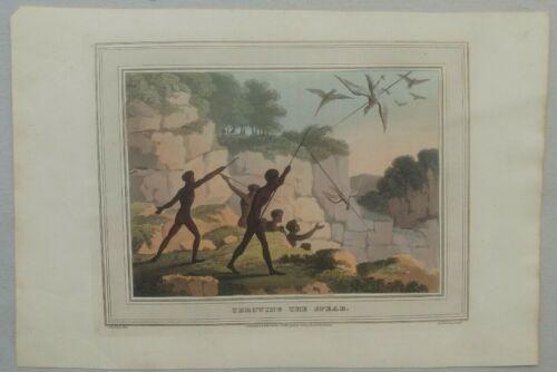 John William Lewin 1813 Australia