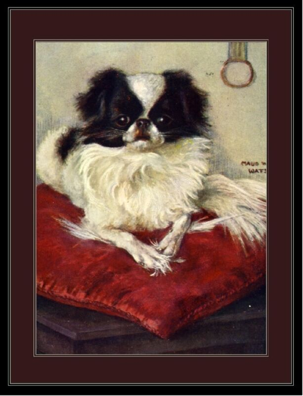 English Picture Print Japanese Chin Spaniel Dog #2 Art
