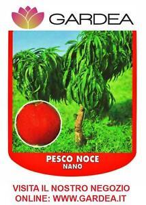 Pesco noce nano piante da frutto nane ebay for Piante nane da frutto