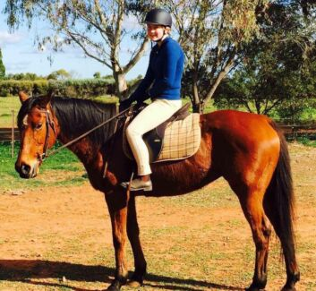 Bay thoroughbred mare  Evanston South Gawler Area Preview