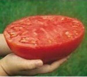 Riesen-Tomaten-Sandwich - 150 samen
