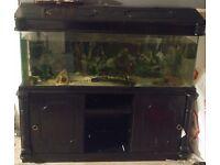 4Ft Fish Tank & Cabinet