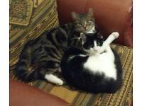 Missing Cats Kirk Ella