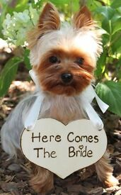 Pet Sitting - For photos On your wedding day!