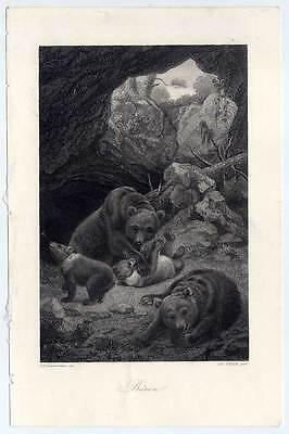 Bären-Bär-Jagd-Wild - Kupferstich 1860