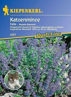 """Katzenminze """" Felix """" frischer Minzeduft    ihre Katze wird es lieben"""