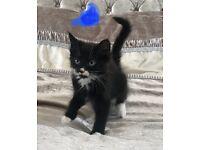 Kittens two boys left