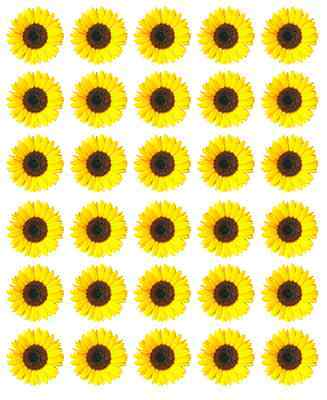 Sunflower Cupcake Toppers (30x Sunflowers Yellow Cupcake Toppers Edible Wafer Paper Fairy Cake)