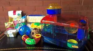 Gerbil or Hamster or Fancy Mouse Heaven!