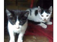 Cute kittens for sale!!!