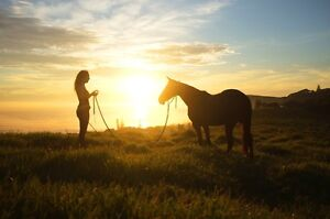 Horse Training/Starting/re-educating Lennox Head Ballina Area Preview