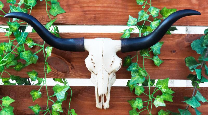 Black & Bone Decorative Longhorn Trophy Skull Wall Sculpture 20 Inch