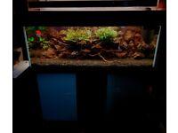 Fish Tank 400ltr, full set