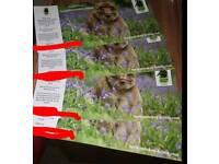 4 trentham monkey forest tickets