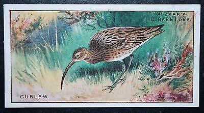 CURLEW        Vintage Scenic Colour Card   VGC
