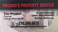 LAWN MAINTENANCE /SPRING CLEANUP