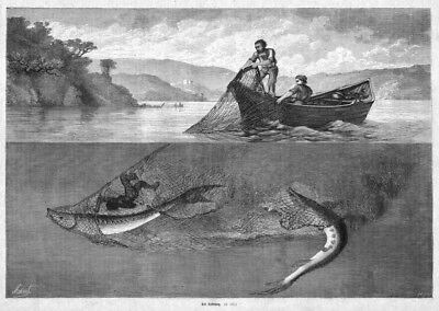 Störe, Stör, Störfang mit dem Netz, Original-Holzstich von 1870