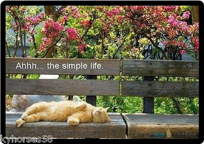 Cat Humor The Simple Life Refrigerator Magnet