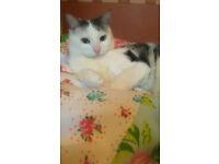 White and Black Beautiful Tabby Cat