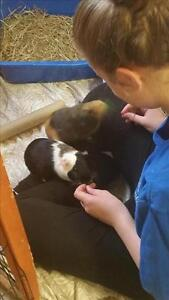 """Baby Male Small & Furry - Guinea Pig: """"Eddie With Monte"""""""