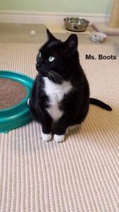 "Adult Female Cat - Tuxedo: ""Miss Boots"""
